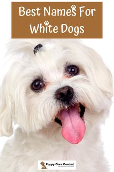 A complete list of the best names for white dogs. White Puppies, White Dogs, Dogs And Puppies, Best Puppy Names, White Names, Puppy Care, Great Places, Puppy Nursery