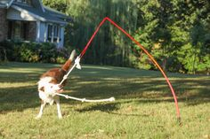 Easy to DIY and some interactive fun for when dogs are left alone