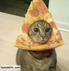 Pizza lezzetlidir kedi şirin ve ponçiktir ikisinin birleşimi !PİZZAKEDİSİ!