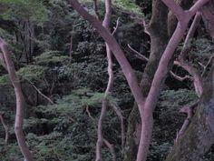 Inside Kiyomizu Temple, Kyoto