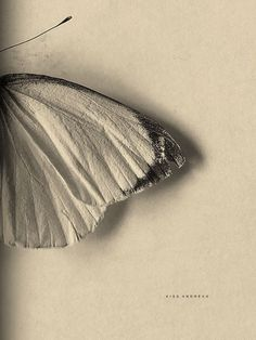 Ze (Portuguese in Spain) **All Photos Copyright to Their Respective Owners. Butterfly Kisses, Butterfly Wings, Butterflies, Unknown Pleasures, Most Beautiful Words, Found Art, Dark Photography, Wild Hearts, Shades Of Red