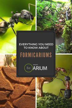 A comprehensive formicarium care guide. Learn about ant farms and how to build & maintain one. DIY formicariums for various plants & ant species. Diy Aquarium, Planted Aquarium, Aquarium Ideas, Types Of Ferns, Types Of Plants, Moss Terrarium, Terrarium Ideas, Terrariums, Ant Species