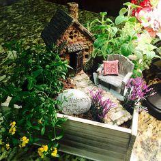 Miniature Garden Cottage In Wooden Planter ~ Herb Garden Kit ~ Wooden Planter…