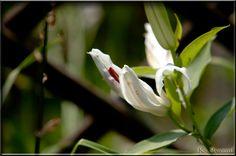 Kwiaty z ogrodu.