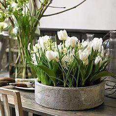 Arriva la primavera #interior #instaflower #elegance #tulips #tulipani #fiori #fleurs #flowers #flowerstyle #green #garden #gardens #giardini #jardin #colours #chic #blooms #natural #nature #myidea #mystyle #mytable #marinacanazzad #myflowers #