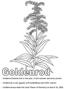 delphinium elongatum or tall larkspur super coloring pinterest. Black Bedroom Furniture Sets. Home Design Ideas