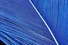 blue feathers - Google Search