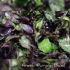 Food Service, Basil, Cabbage, Restaurant, Fresh, Vegetables, Plants, Instagram, Veggies