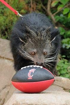 Lucy the Bearcat ---she's obviously a Cincinnati fan!