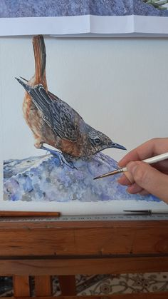 """Watercolour Cape Rock Thrush, entitled """"Jump!"""". See the work-in-progress of this piece in my latest blog post! #watercolours #watercolor 🇿🇦 The Happy Struggling Artist Jumping To Conclusions, Modern Artwork, Wildlife Art, Watercolours, How To Introduce Yourself, Cool Photos, Cape, Fine Art Prints, Rock"""