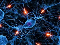 The average human brain has about 100 billion neurons. But what makes us intelligent is the rich connections between those neurons, and the myelination of those connections.