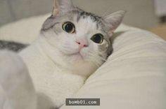 ▼貓咪一定不能理解人類每天早出晚歸的心情