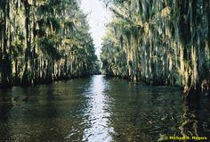 Caddo Lake--my father's home.  Used to think my granddaddy owned the whole lake.