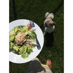 Who's the biggest fan of #WildPlanet Tuna in your family? @the_paleo_partridge and her pup both have their eyes on this delicious summer salad!