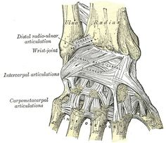 How to Fix Sore Wrists: Simple Wrist Exercises Carpal Tunnel Surgery, Carpal Tunnel Syndrome, Wrist Pain, Hand Wrist, Lose Fat Fast, Lose Body Fat, Wrist Anatomy, Body Anatomy, Carpal Tunnel Exercises