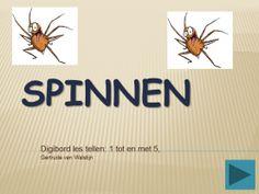 Digibordles spinnen: tellen 1 tot en met 5    http://leermiddel.digischool.nl/po/leermiddel/8f67ed37502c8d8e3f44adec80842e79?s=1.11