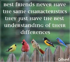 """""""Best friends never have the same characteristics they just have the best understanding of their differences"""" - unknown #quote Be Balanced. Be Natural. Be You. - Omved"""