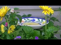 How to Make a Butterfly Feeder from thrifted stuff Diy Garden Projects, Garden Crafts, Cool Diy Projects, Garden Art, Garden Ideas, Patio Ideas, Butterfly Food, Butterfly Feeder, Beautiful Bugs