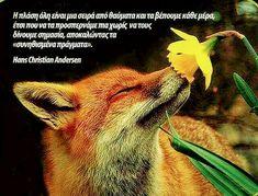 Fox, Christian, Life, Animals, Quotes, Quotations, Animales, Animaux, Animal