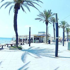 #alicante  #torrevieja #palmeras #playa #mar #vacaciones #holidays  #merinojuanantonio