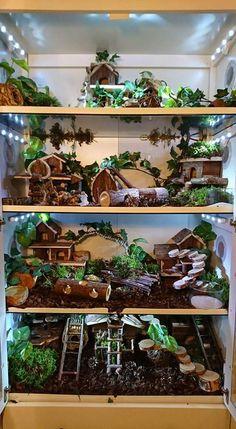 Dvärgarnas terrarie