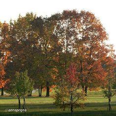 #Torino raccontata dai cittadini per #inTO Foto di annapegna I magnifici colori del parco Colonnetti