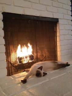A StormHaven cat basking in the glow of the fireplace on a chilly day.