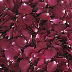Stargazer Romance Preserved Freeze Dried Merlot Colored Rose Petals. Shop Now! http://flyboynaturals.com/products/stargazer-romance-preserved-freeze-dried-merlot-red-rose-petals.html