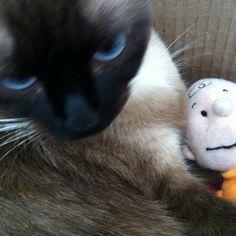 My friend, Charlie Brown