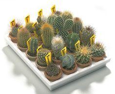 Multiplicación de Plantas Crasas y Cactus IV - Jardineria On