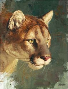 Puma !--Greg Beecham, painter of animals and more.