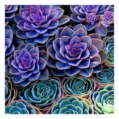 teal and purple succulents , great makeup inspiration❤
