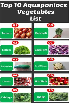 "Top 10 aquaponics vegetables list every body should know ""Break-Through Organic Gardening Secret Grows You Up To 10 Times The Plants, In Half The Time, With Healthier Plants, While the ""Fish"" Do All the Work. Aquaponics System, Aquaponics Greenhouse, Aquaponics Fish, Hydroponic Gardening, Organic Gardening, Gardening Tips, Vintage Gardening, Hydroponic Vegetables, Hydroponic Grow Systems"