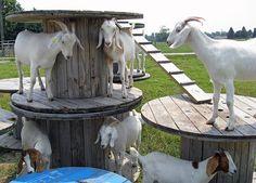 my future goat will have a jungle gym Raising Farm Animals, Raising Goats, Goat Playground, Playground Ideas, Goat Fence, Goat Shelter, Goat Barn, Nigerian Dwarf Goats, Cute Goats