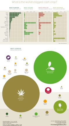 World's Biggest Cash Crops? The winner may surprise you