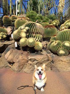 アンナちゃん/伊豆シャボテン公園にて/週末の伊豆旅行で行った伊豆シャボテン公園のサボテンの前でパシャリ。前日は大雨でほとんど遊べませんでしたが、伊豆高原のわんパラに泊まった次の日は見事な天気。たくさん遊べてアンナもいい笑顔です。