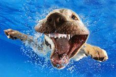Fotos de cachorros Debaixo D'agua - POPXD