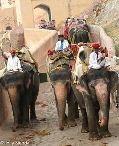 Indians ride the elephants, Amber Fort, Jaipur, India. Photo by Jolly Sienda Photography.