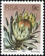 Issued of May R S A Protea Roupelliae. Vacation Scrapbook, Scrapbook Albums, Protea Art, Vintage Drawing, Flower Stamp, Stamp Collecting, My Stamp, Drawing S, Postage Stamps
