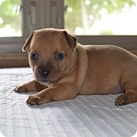 Adopt A Pet :: Matilda - West Bend, WI