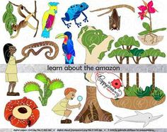 Learning about The Amazon Rainforest Clipart by Poppydreamz from Poppydreamz Digital Art on TeachersNotebook.com -  (1 page)  - Amazon Rainforest digital clipart including map, rainforest diagram, flowers and animals of the rainforest, and a boy and girl explorer.