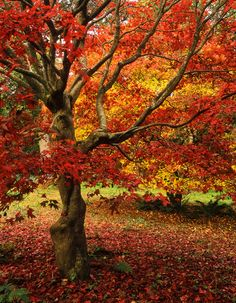 Winkworth Arboretum in Surrey, England; my nominee for the annual Autumnal Celebration of all Sentient Beings (ukgardenphotos on flickr) ...