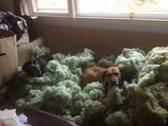 """""""Hey you're home! You are never gonna believe what Buddy and I found. See? Look at all this cool fluffy stuff! It was inside the couch just waiting for us to dig it out. And to think we've been sitting on it the whole time! How crazy is that, right?!?"""" (photo by Denise M. Bridgewater, N.J.) (from Animal Antics: JB pop-Eggs @ pinterest.com/...)"""