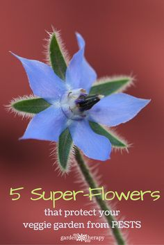 Super Power Flowers that protect your garden from pests