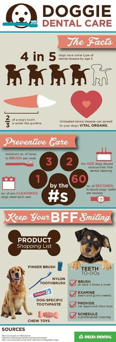 Make sure Fido and Fluffy have healthy chompers! Use this handy infographic! // KaufmannsPuppyTraining.com // Kaufmann's Puppy Training // dog training // dog love // puppy love // #ad #huntinginfographic #doginfographic