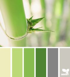 Bamboo palette - by Design seeds...