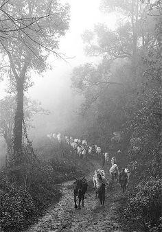 Birmanie - Chemin boueux dans la région du lac Inle