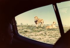 safari park #Bestinthecountry