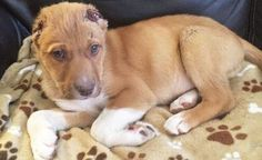 Sign the petition urging police to make every effort to find and prosecute the attacker who ruthlessly cut a puppy's ears off to the scalp.