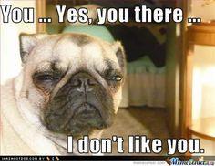 dog hump day memes   Dog Humping Meme